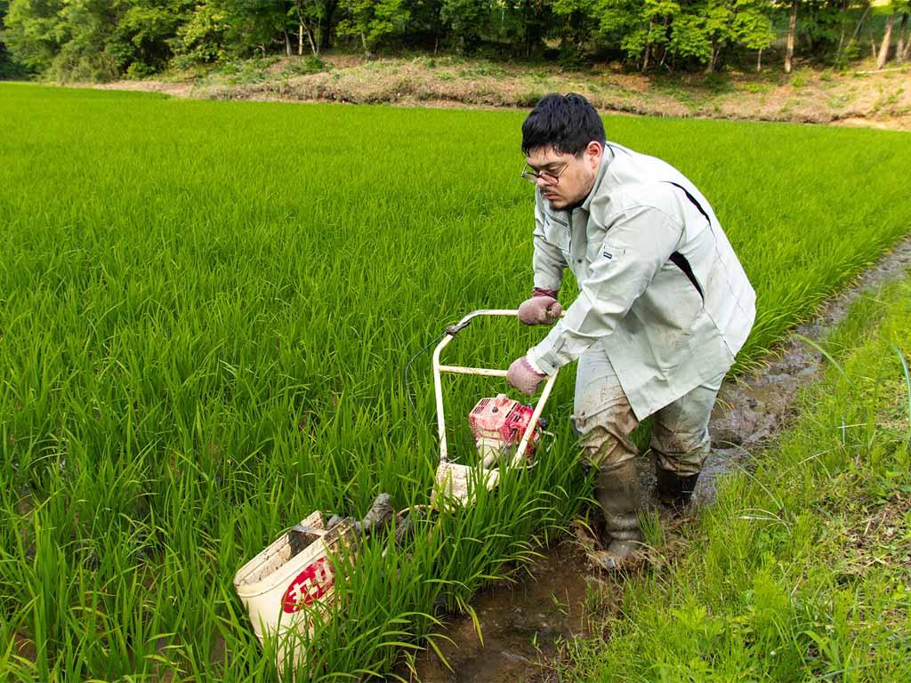 Japanese Farmer