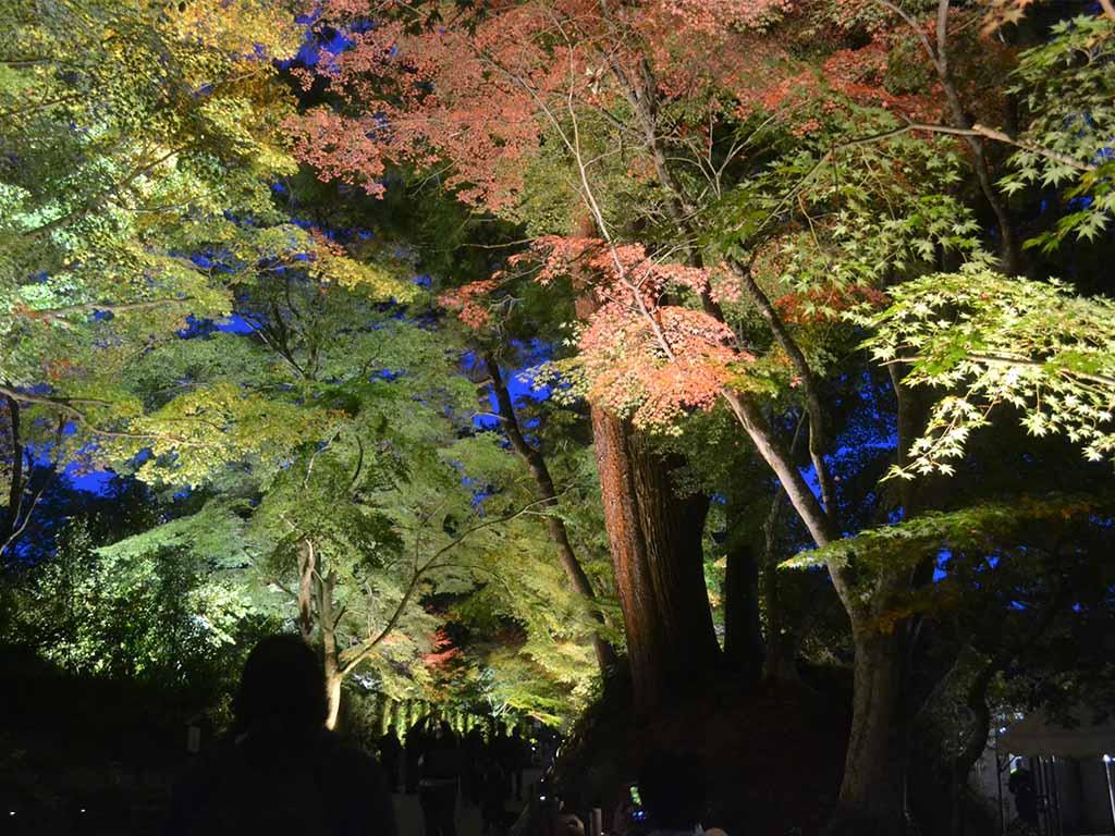 Chūsonji's nighttime illumination,Hiraizumi